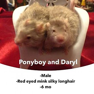 Mouse for adoption in Walker, Louisiana - Ponyboy and Daryl