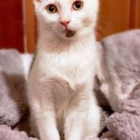 Adopt A Pet :: Mickey - Wichita, KS