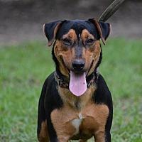 Adopt A Pet :: Mo - Daleville, AL