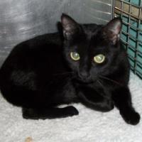Adopt A Pet :: Tulip - Clinton, MO