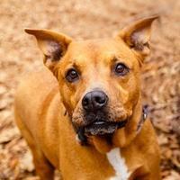 Adopt A Pet :: AGATHA - Decatur, GA