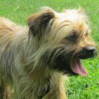 Adopt A Pet :: Ren - Chicago, IL