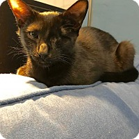 Adopt A Pet :: Corfu - Brooklyn, NY