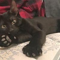 Adopt A Pet :: Kevin - Devon, PA