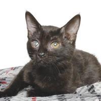 Adopt A Pet :: EQUINOX - Gloucester, VA