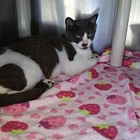 Adopt A Pet :: Franka - Chippewa Falls, WI