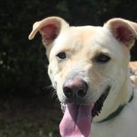 Adopt A Pet :: JAKE - Daytona Beach, FL