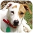 Photo 1 - Jack Russell Terrier Mix Dog for adoption in Dunkirk, New York - Shelby