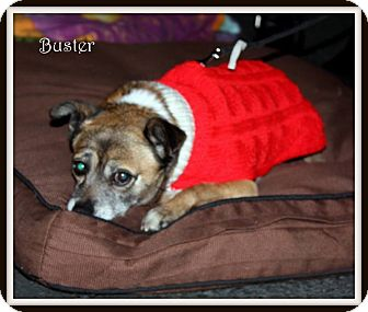 Chihuahua Mix Dog for adoption in Yuba City, California - 11/14 Buster