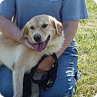 Adopt A Pet :: # 103-12 - ADOPTED! - Zanesville, OH