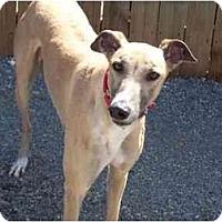 Adopt A Pet :: Weston - Roanoke, VA
