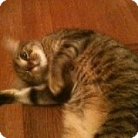 Adopt A Pet :: Bonnie - Justin, TX