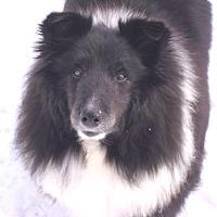 Adopt A Pet :: Maisie - Circle Pines, MN