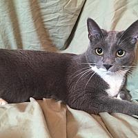 Adopt A Pet :: Pascal - Cerritos, CA