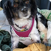 Adopt A Pet :: Kaylee - Decatur, GA