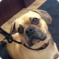 Adopt A Pet :: Jaydah - Cumberland, MD