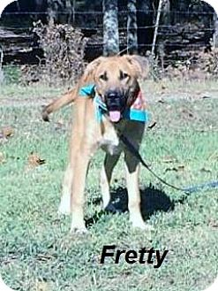 Shepherd (Unknown Type)/Hound (Unknown Type) Mix Dog for adoption in East Hartford, Connecticut - Fretty in CT