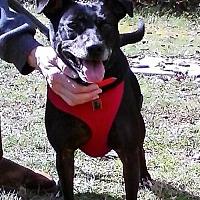 Adopt A Pet :: Katie - Ellijay, GA