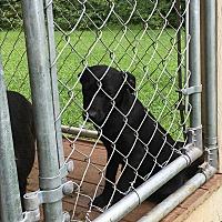 Adopt A Pet :: Milly - Staunton, VA