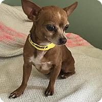Adopt A Pet :: Peanut Butter - Costa Mesa, CA