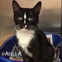 Adopt A Pet :: Barilla - Great Neck, NY