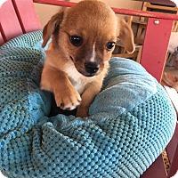 Adopt A Pet :: Emmie - Scottsdale, AZ