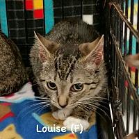 Adopt A Pet :: Clyde - West Orange, NJ