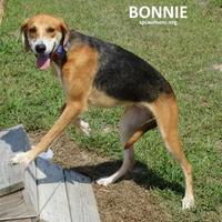 Adopt A Pet :: Bonnie - Elizabeth City, NC