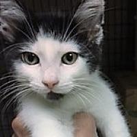Adopt A Pet :: Eeyore - Medina, OH
