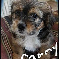 Adopt A Pet :: Cammy - Palm Bay, FL