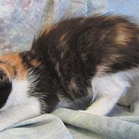Adopt A Pet :: ATHENA - Anna, IL