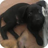 Adopt A Pet :: Guava - Phoenix, AZ