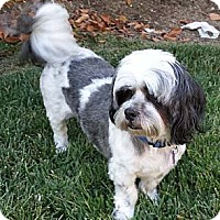 Adopt A Pet :: BENTLEY - Mission Viejo, CA