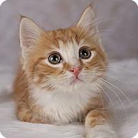 Adopt A Pet :: Mickey - Eagan, MN