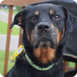 Rottweiler Mix Dog for adoption in Minneapolis, Minnesota - Roxy