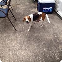 Adopt A Pet :: Bridgette - Marlton, NJ