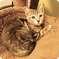 Adopt A Pet :: Gabby - The Colony, TX