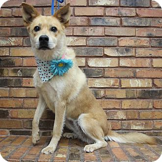 Retriever (Unknown Type) Mix Dog for adoption in Benbrook, Texas - Zoey