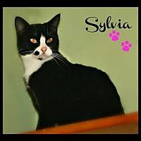 Adopt A Pet :: Sylvia - Marion, KY