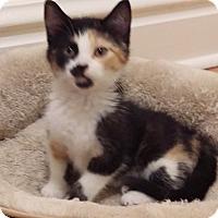 Adopt A Pet :: Artemis - St. Louis, MO