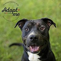Adopt A Pet :: Zeke - Lyons, NY
