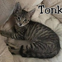 Adopt A Pet :: Tonka - North Richland Hills, TX
