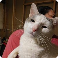 Adopt A Pet :: ZEIGLER - Millerstown, PA