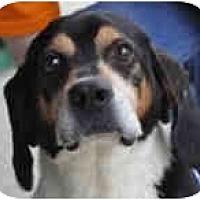 Adopt A Pet :: Jon - Indianapolis, IN