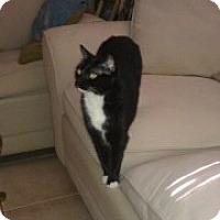 Adopt A Pet :: Judy - Naples, FL