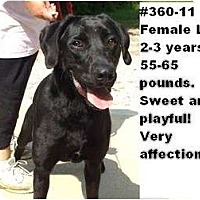 Adopt A Pet :: # 360-11 - ADOPTED! - Zanesville, OH