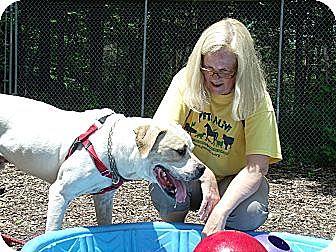 St. Bernard Mix Dog for adoption in Middletown, New York - Rexx
