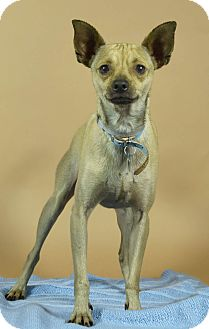 Terrier (Unknown Type, Medium) Mix Dog for adoption in Port Washington, New York - Mikey
