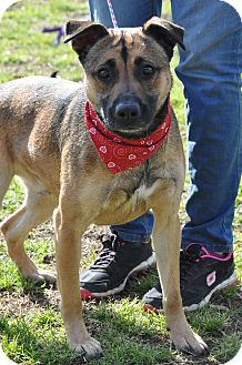 German Shepherd Dog Mix Dog for adoption in Colonial Heights, Virginia - Bruce