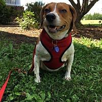 Adopt A Pet :: Sunshine Baltimore - Waldorf, MD